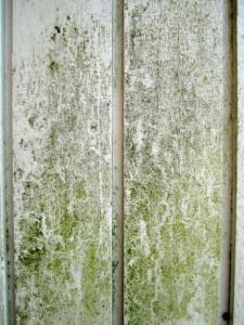 Det ser ikke bra ut, og er heller ikke bra for husveggene. Vask veggen!