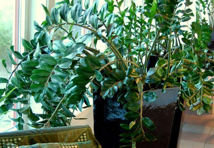 Potteplantene trenger litt ekstra stell nå (Foto: Opplysningskontoret for blomster og planter).