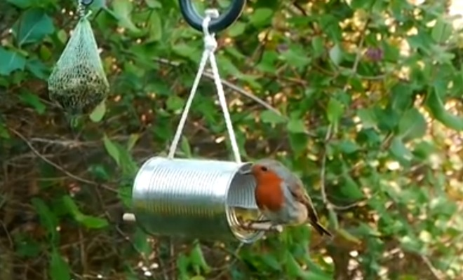 hvordan lage fuglemat