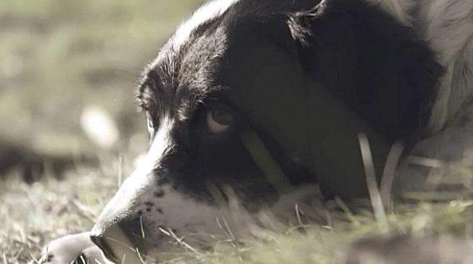 En Hunds Siste Onske