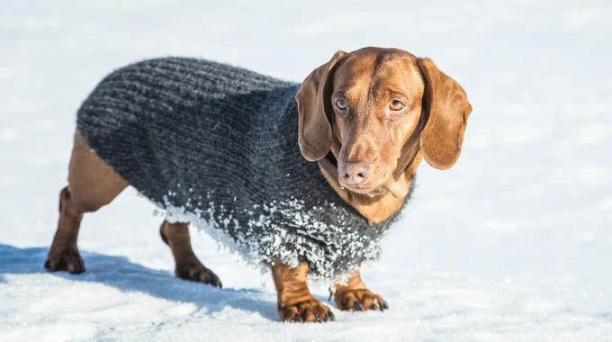 Vinteren er også kald for de firebeinte. Slik strikker du
